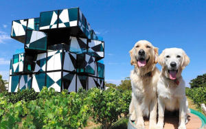 d'arenberg dogs